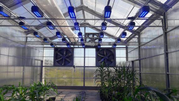 luz no cultivo protegido