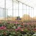 Benefícios no cultivo de flores e plantas em estufas agrícolas!