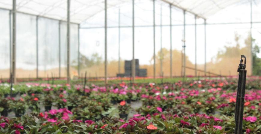 plantio de flores