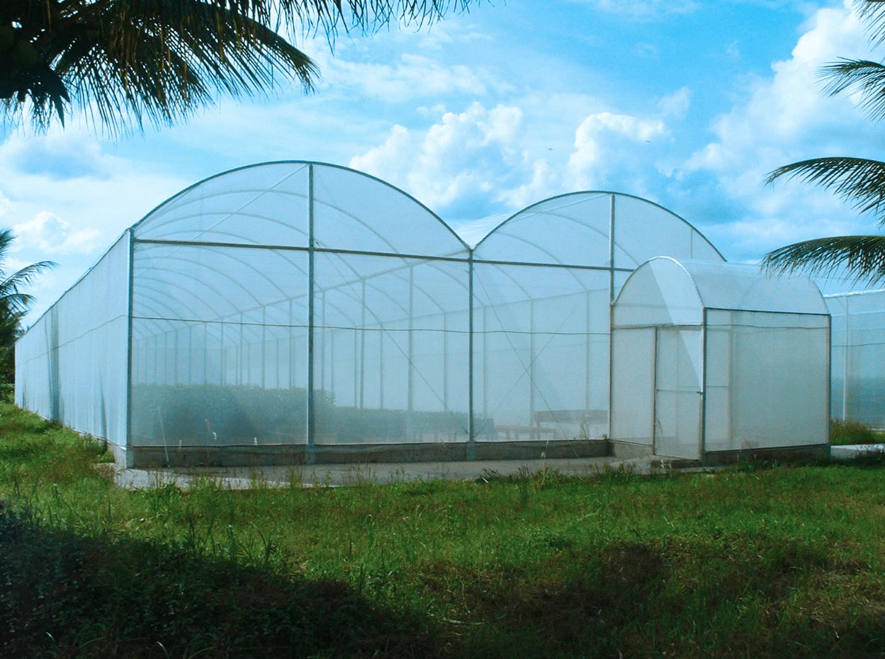 produção em estufa agrícola
