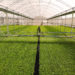Viveiro de mudas, fertilizantes para fertirrigação.